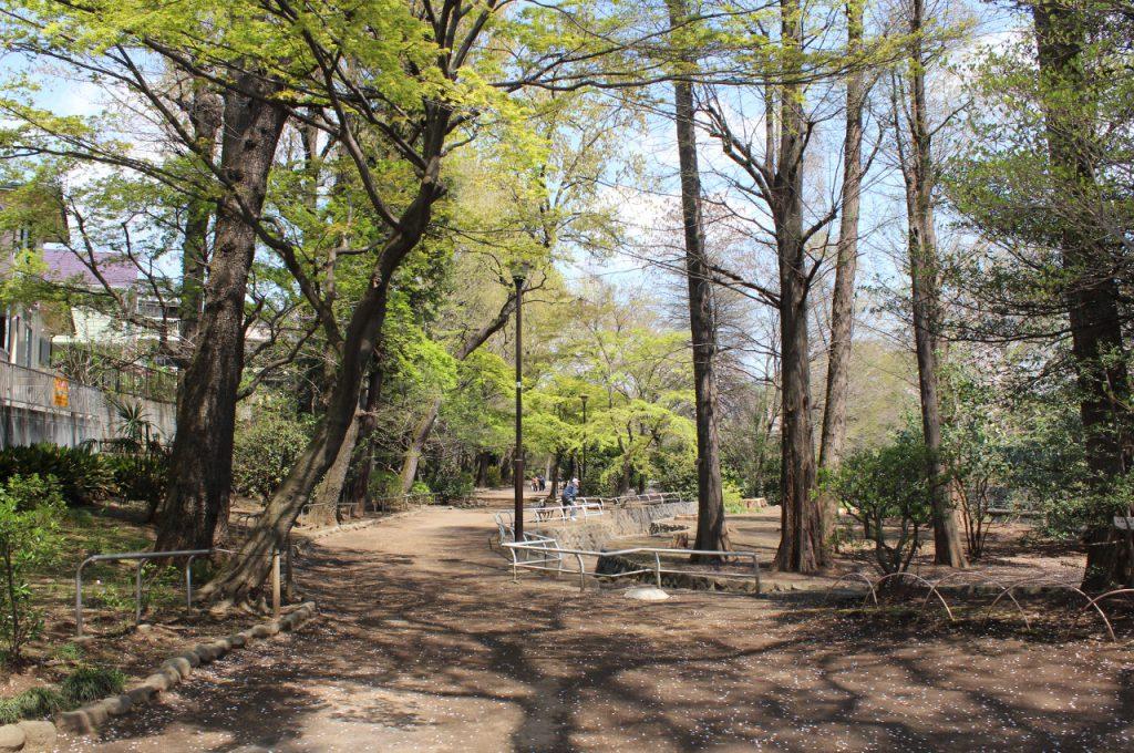 武蔵関公園緑